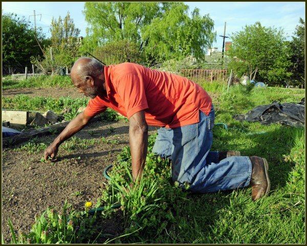 Man on his knees gardening